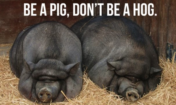 Difference Between Pigs and Hogs